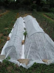 Garden under wraps