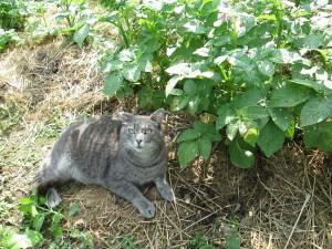 Ricky Guarding the Garden